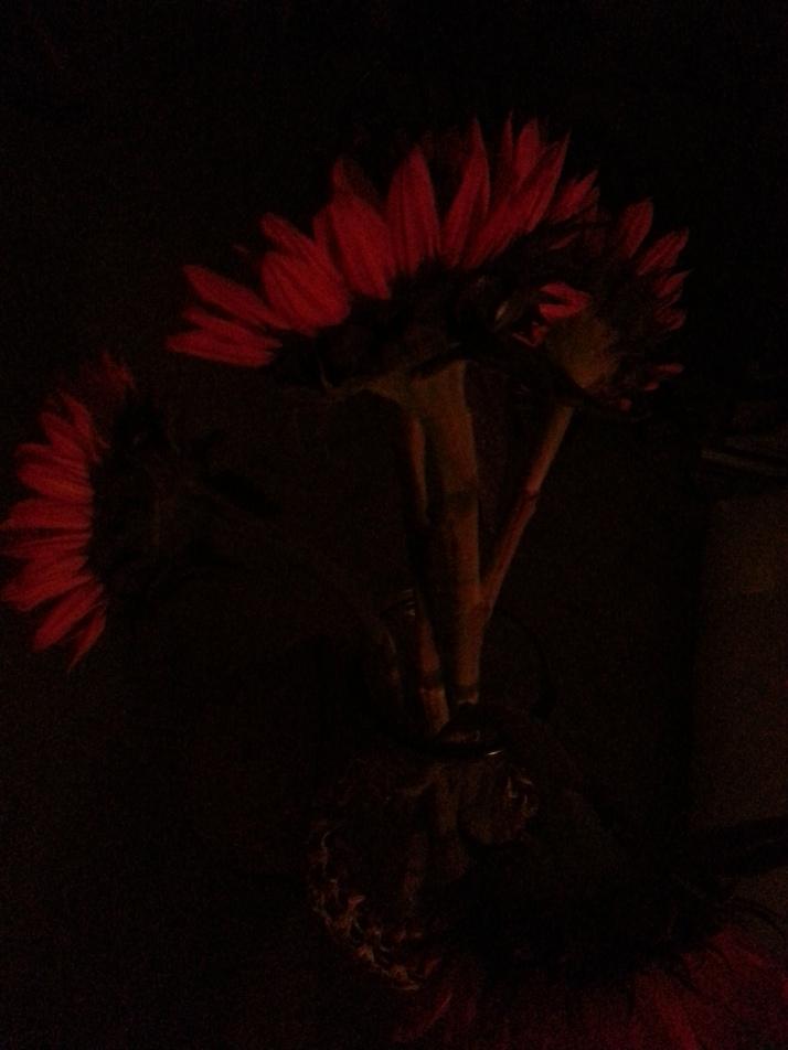 red illuminated sunflowers