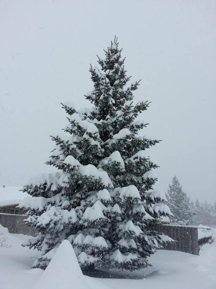 snow storm20144